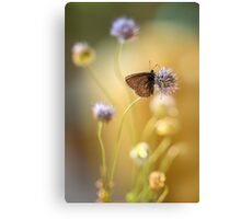 Sunny afternoon impression with small butterfly Canvas Print