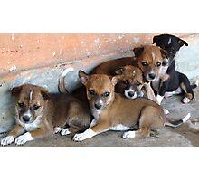 puppies.... Photographic Print
