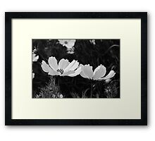Black and white Cosmos flowers Framed Print