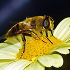 Hoverfly by Peter Stone
