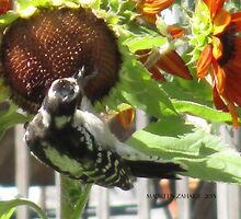 Woodpecker Eating Sunflower Seeds in Mo's Garden 3 by Maureen Zaharie
