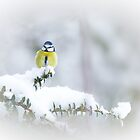 Winter Perch by Sarah-fiona Helme
