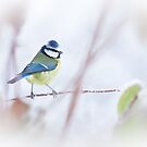 Winter Pose by Sarah-fiona Helme