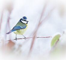 Winter Pose by Sarah-fiona Helme