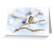 Snowy Perch Greeting Card