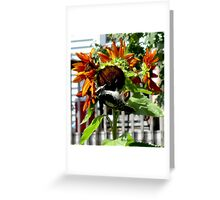 Woodpecker Eating Sunflower Seeds in Mo's Garden 1 Greeting Card