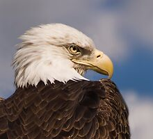 """Eagle One"" - closeup portrait of a bald eagle by John Hartung"