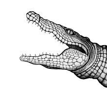 Crocodile by hannighan