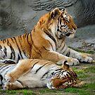 Cute Tigers by Usha Ganesh