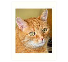 Cat Close-Up Art Print