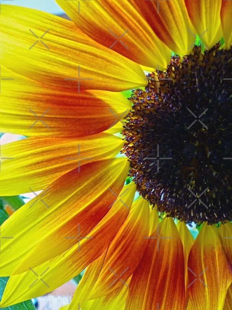 Sunflower by Susan S. Kline