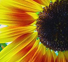 Sunflower by Susan S. Kline