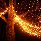 Christmas Lights on a Tree by Maria  Gonzalez