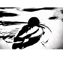 Abstract Mallard Photographic Print