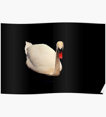 Black Water Swan Poster