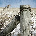 Of Wood And Wire by Christine Annas