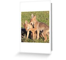 Pretty Coyote Greeting Card