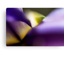 Iris Abstract Canvas Print
