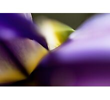 Iris Abstract Photographic Print