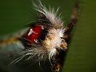 Moth Macro I by kutayk