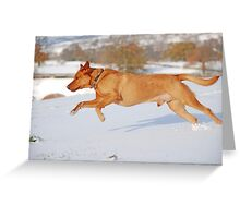 Fox Red Labrador In Action Greeting Card