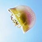 Jelly, Great Barrier Reef / Emma M Birdsey by Emma M Birdsey