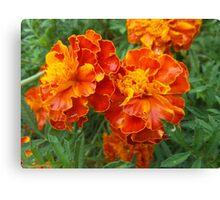 Vibrant Red-Orange Flowers Canvas Print