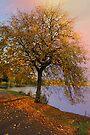 Rainbow Sky by simpsonvisuals