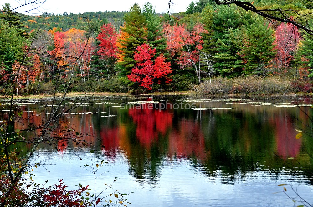 Foliage Reflection by smalletphotos