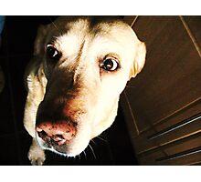 Scaredy Dog Photographic Print