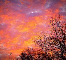 Winter Sunrise by Lisa Taylor