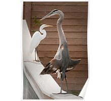 """""""Flasher"""" - a great blue heron seems to be exposing itself Poster"""