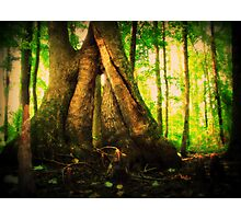 Tree Hugs and Sunlight Kisses Photographic Print