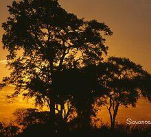 Savannah Sunset by KurtKeller