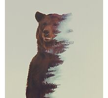 Observing bear Photographic Print