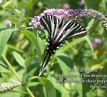 He will regard the prayer by WalnutHill