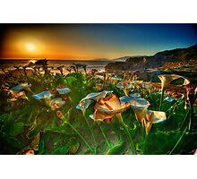 Sutro Baths San Francisco Photographic Print