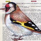 European Goldfinch: Purpose and Strategy by paulapaints