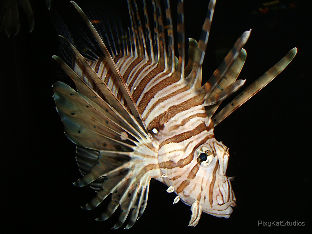 Volitans lionfish in the darkenss by PixyKatStudios