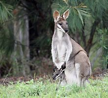 Pretty Face Wallaby &Joey by triciaoshea