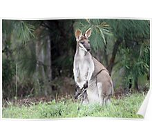 Pretty Face Wallaby &Joey Poster