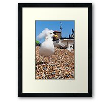 Seagull on the beach Framed Print