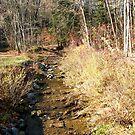 Fall Creek by teresa731