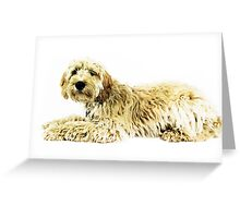 Golden doodle dog  Greeting Card