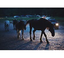 Light behind horses Photographic Print