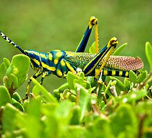 AK Grasshopper - Southern India by Detour