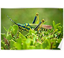 AK Grasshopper - Southern India Poster