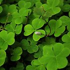 Clovers by Cody Dykeman