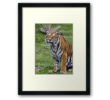 Holy Toledo! Who is That? Framed Print
