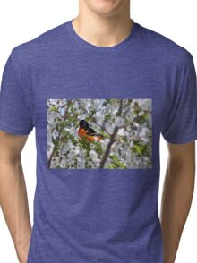 Baltimore oriole in cherry tree Tri-blend T-Shirt